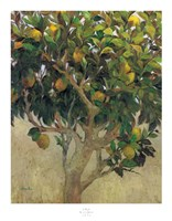 Limonero Fine Art Print