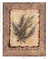 Vintage Herbs - Rosemary Fine Art Print