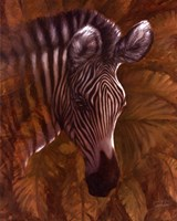 Safari Zebra Fine Art Print