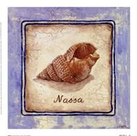 Nassa Framed Print