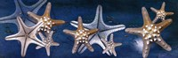 Starfish Fine Art Print