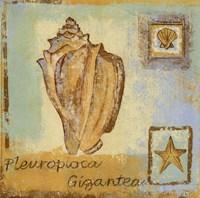 Pleurploca Gigantea Fine Art Print