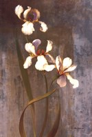 Iris Rhythms Fine Art Print