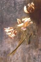 Tulip Rhythms Fine Art Print