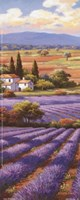 Fields Of Lavender II Fine Art Print