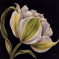 Fleur Blanche Framed Print