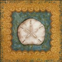 Sanibel Sanddollar Framed Print