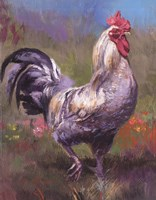 Purple Rooster Fine Art Print