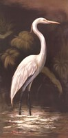 Brown Egret Fine Art Print