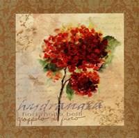 Hydrangea II Fine Art Print