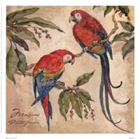Macaw Fine Art Print