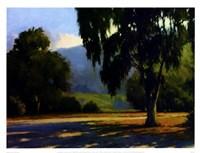 Eucalyptus Sunset Fine Art Print