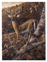 Duke of Autumn Fine Art Print