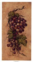 Vintage Grapevine ll Fine Art Print