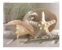 Cali Starfish IV Fine Art Print