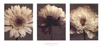 Daisy/Dahlia Fine Art Print