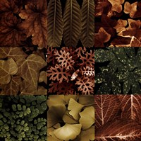Leaf Montage Fine Art Print