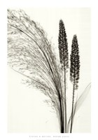 Broom Grass Fine Art Print