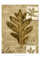 Leaf Collage I Fine Art Print