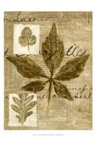 Leaf Collage III Fine Art Print