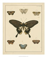 Heirloom Butterflies I Framed Print