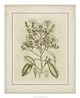 Tinted Botanical I Fine Art Print