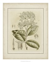 Tinted Botanical III Fine Art Print