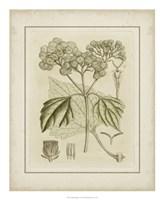Tinted Botanical IV Fine Art Print