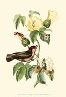 Cuvier Exotic Birds I Fine Art Print