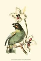 Cuvier Exotic Birds III Fine Art Print