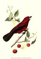 Cuvier Exotic Birds V Fine Art Print