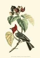 Cuvier Exotic Birds VI Fine Art Print