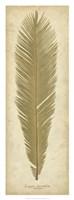 Sago Palm II Fine Art Print