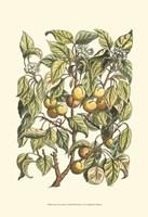 Apricot Tree Branch Fine Art Print