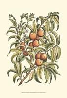 Peach Tree Branch Fine Art Print