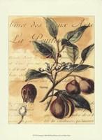 Nutmeg Fine Art Print