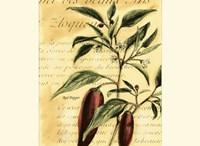 Red Pepper Fine Art Print