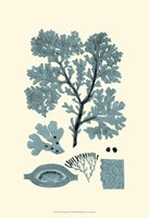 Azure Seaweed I Fine Art Print
