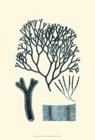 Azure Seaweed IV Fine Art Print