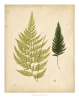 Cottage Ferns I Fine Art Print