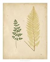 Cottage Ferns IV Fine Art Print