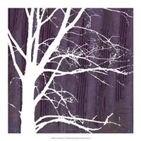 Aurora Silhouette IV Framed Print