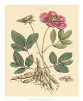 Blushing Pink Florals I Fine Art Print