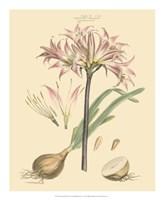 Blushing Pink Florals II Fine Art Print