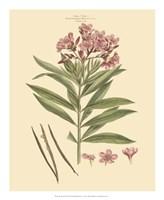 Blushing Pink Florals III Fine Art Print