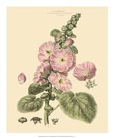 Blushing Pink Florals V Fine Art Print
