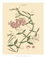 Blushing Pink Florals VI Fine Art Print