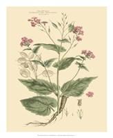 Blushing Pink Florals VII Fine Art Print