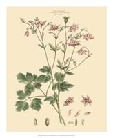 Blushing Pink Florals IX Fine Art Print