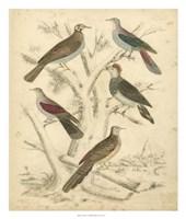 Avian Habitat I Fine Art Print
